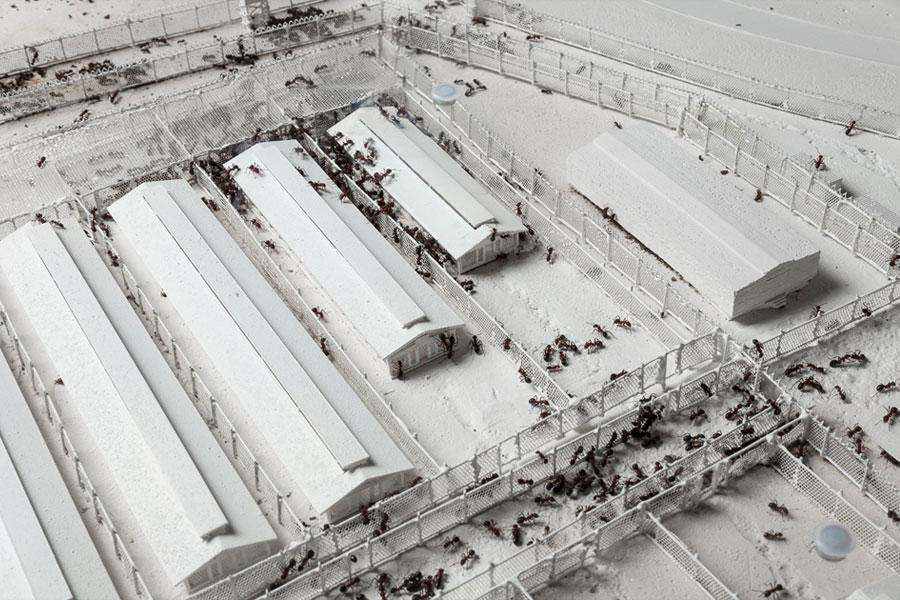 Homo Desperatus, Gevangenenkamp Guantánamo Bay (Cuba)